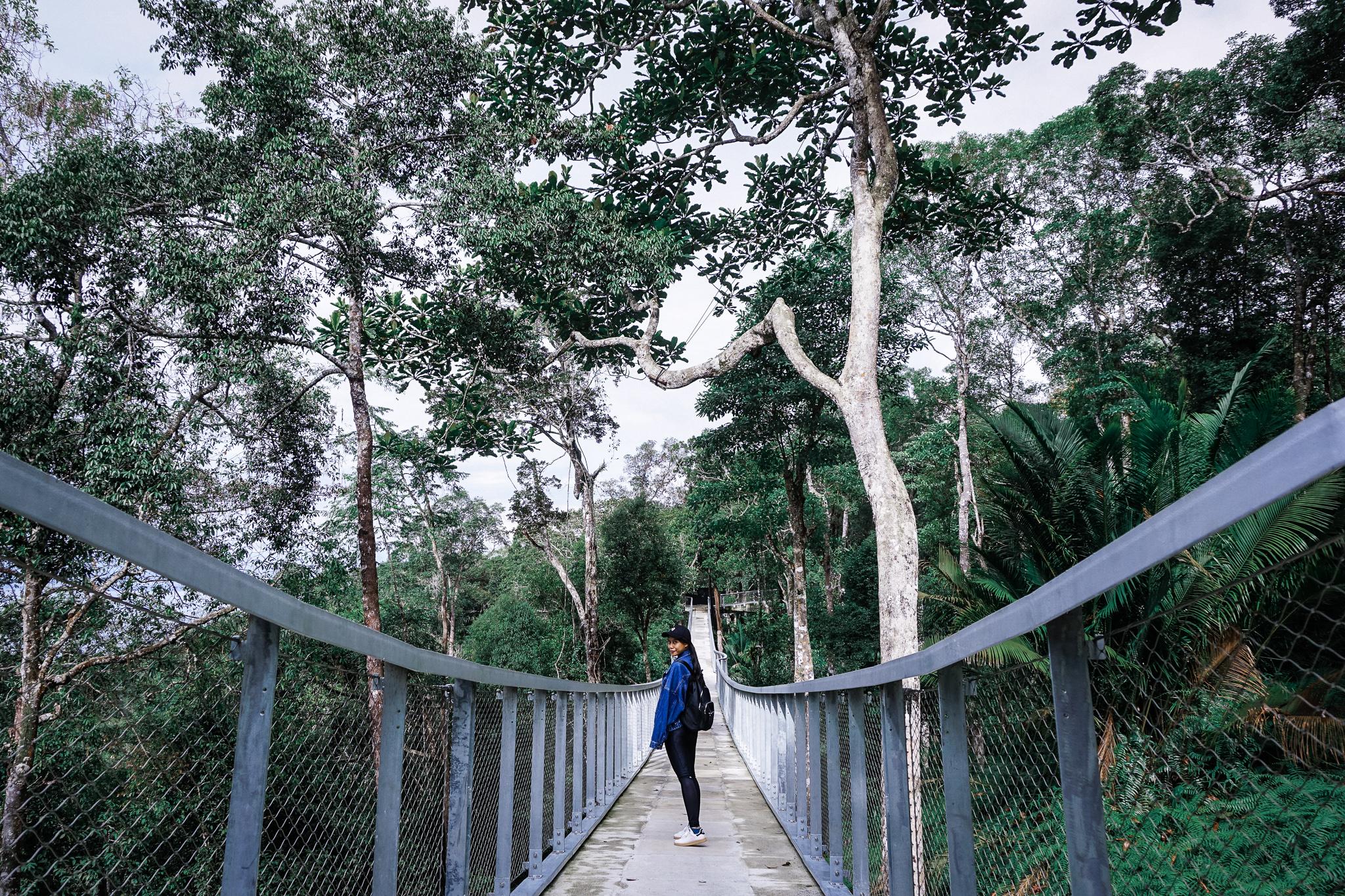 Penang Hill Langur Way Canopy Walk